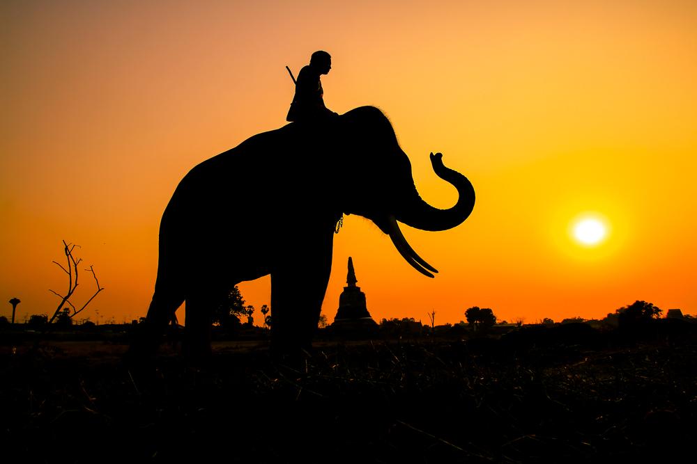 Thailand - Elephant Sanctuary - Sunset
