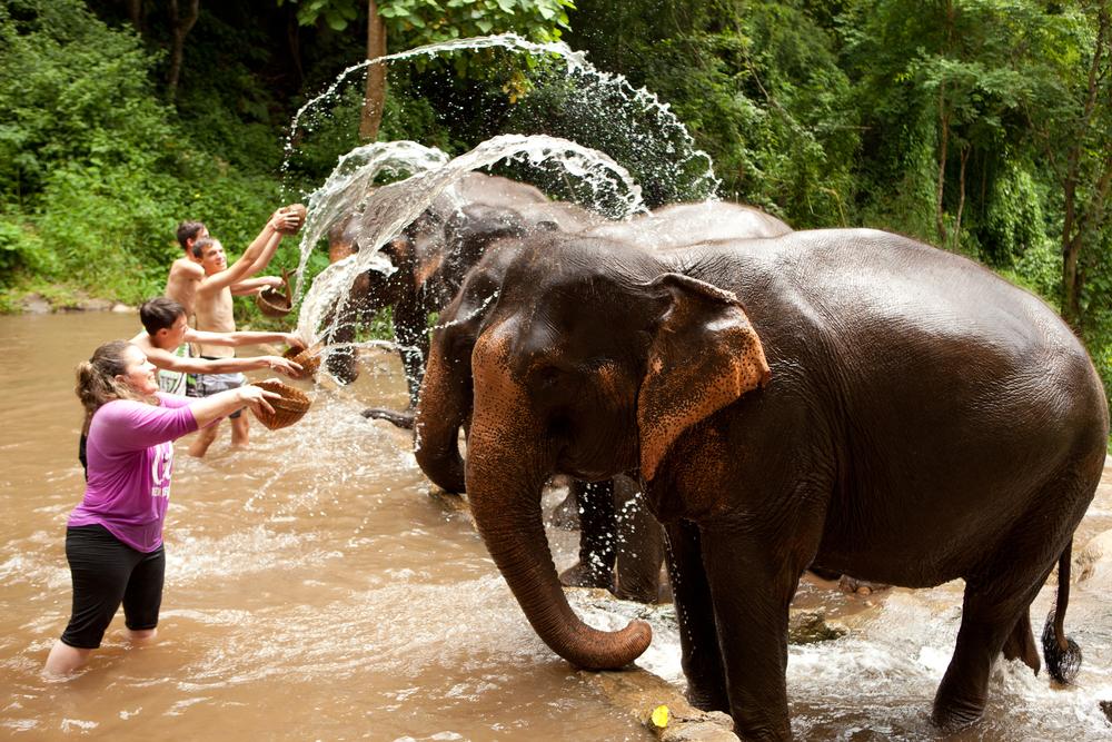 Thailand Elephant Conservation - Bathing