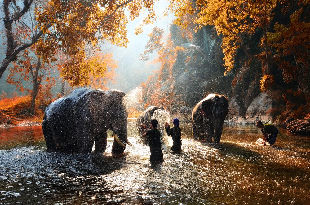Thailand - Elephant Sanctuary Conservation